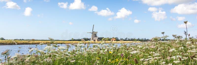 Paisaje holandés con el molino de viento y las flores salvajes foto de archivo libre de regalías