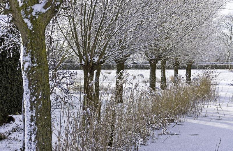 Paisaje holandés del invierno fotografía de archivo libre de regalías