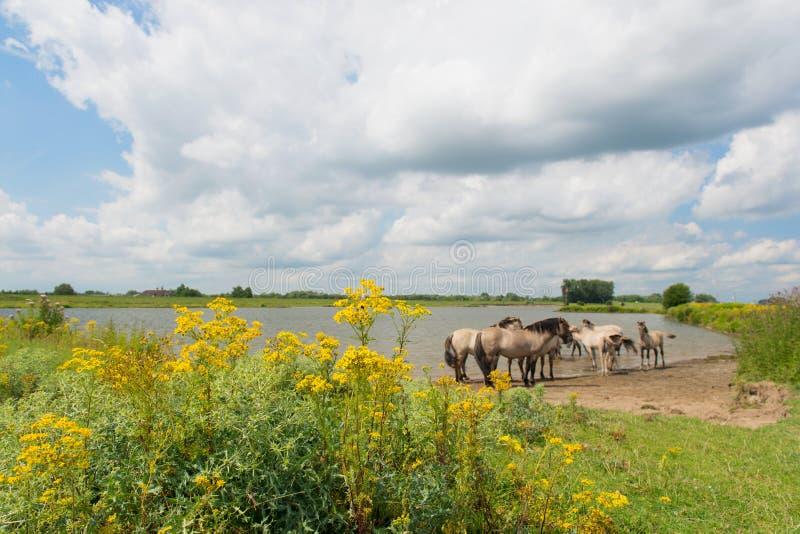 Paisaje holandés del río foto de archivo libre de regalías