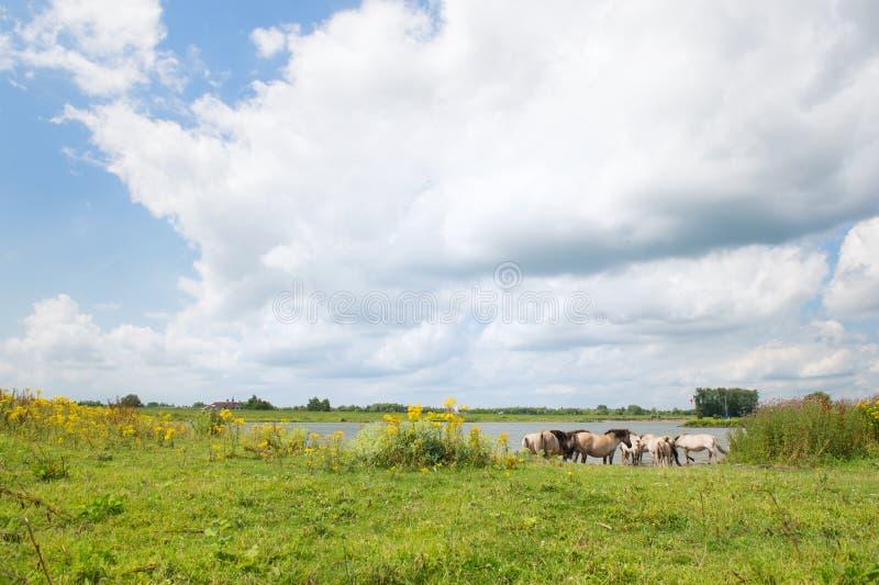 Paisaje holandés del río imagen de archivo libre de regalías