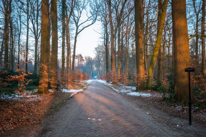 Paisaje holandés típico del invierno en enero cerca de Delden Twente, Overijssel fotos de archivo