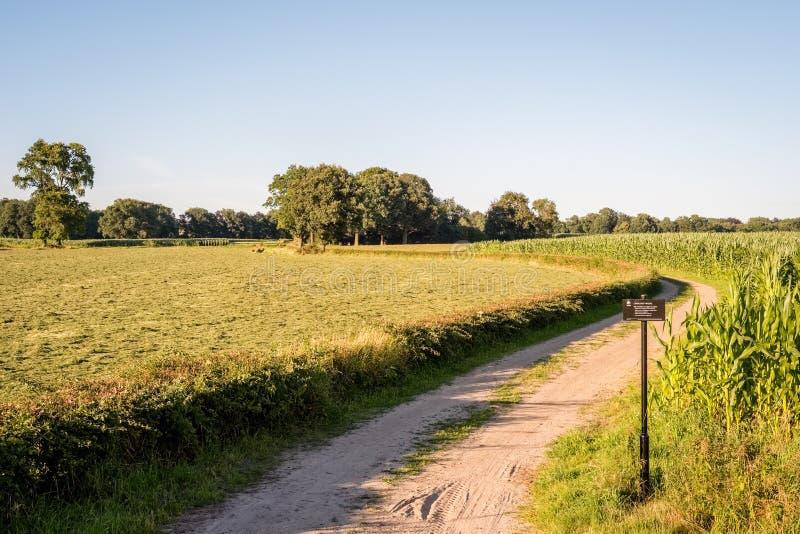 Paisaje holandés típico del verano en julio cerca de Delden Twente, Overijssel foto de archivo