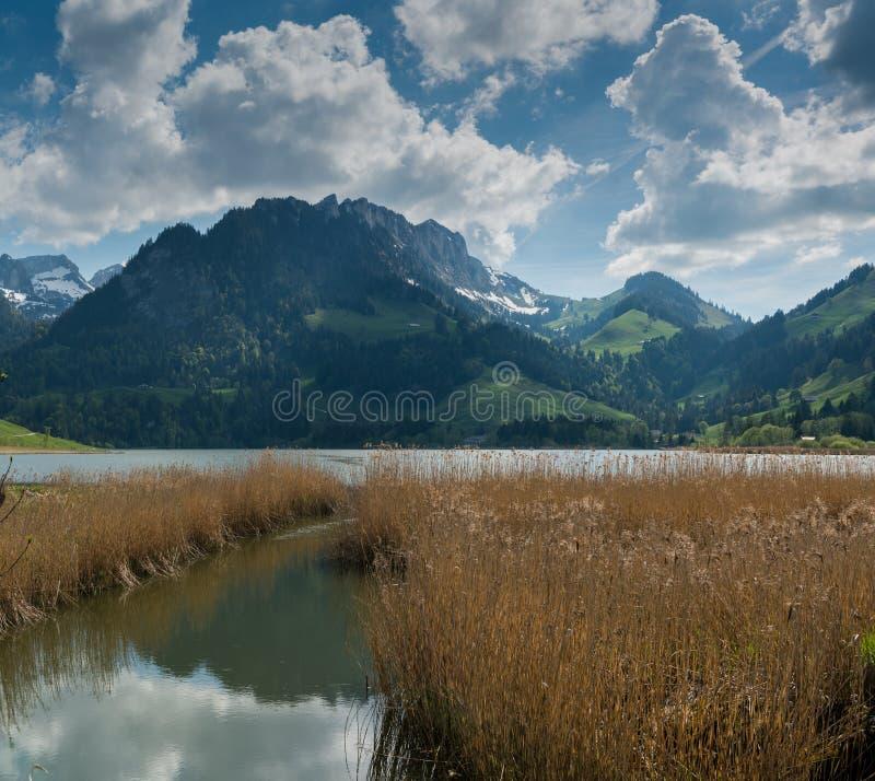 Paisaje idílico de la montaña en las montañas suizas con un lago y una hierba de oro del pantano en el primero plano foto de archivo