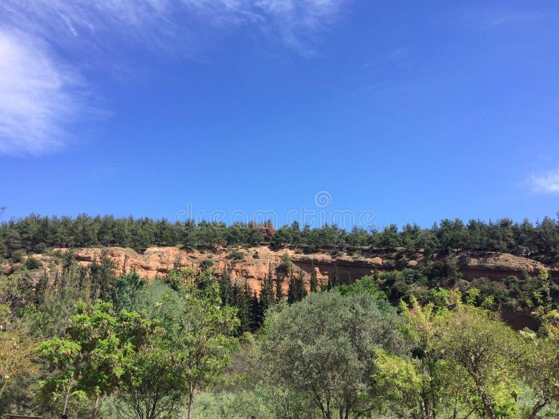 Paisaje idílico del verano, reflexión del árbol de pino en un lago Agua azul en un lago del bosque con los ?rboles de pino imágenes de archivo libres de regalías