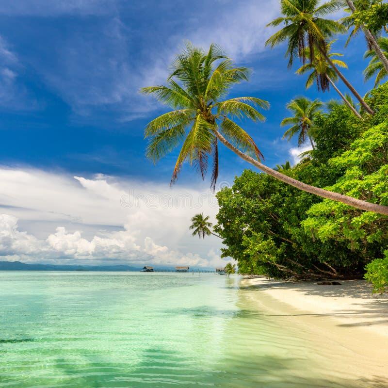Paisaje idillático de playa tropical - mar cálido, palmeras, cielo azul foto de archivo libre de regalías