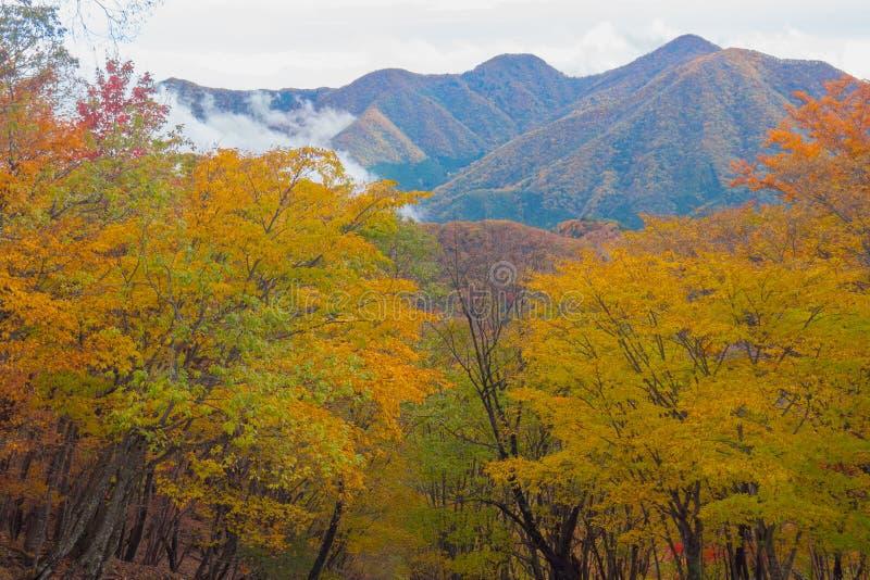 Paisaje impresionante del otoño de la montaña con los árboles forestales coloridos imagenes de archivo