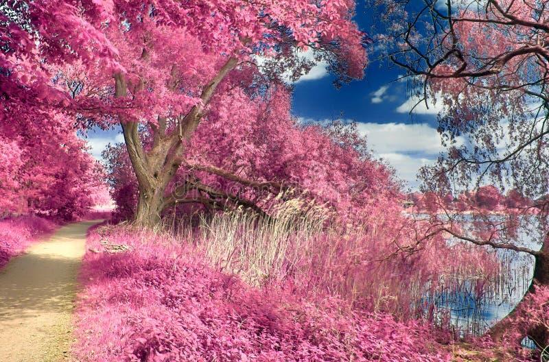 Paisaje infrarrojo de la fantasía hermosa con los árboles en un bosque y campos y las porciones de elementos púrpuras y de un cie fotografía de archivo libre de regalías