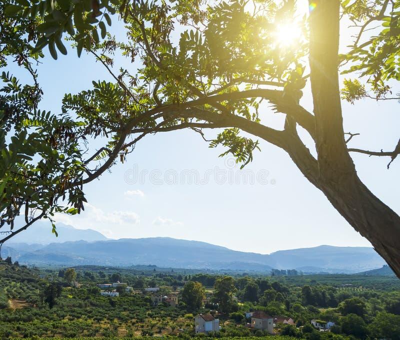Paisaje inspirado hermoso de las montañas en día de verano el sol brilla a través de las ramas de un árbol en el primero plano imagen de archivo