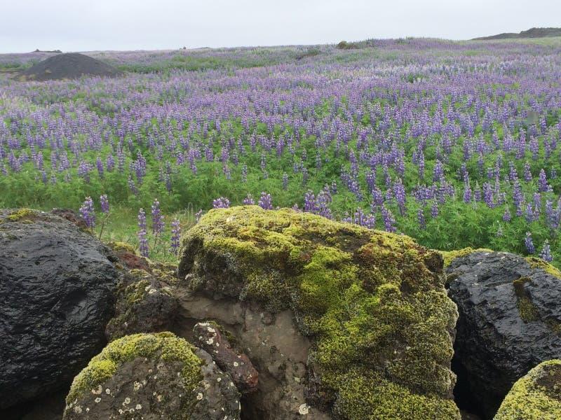Paisaje islandés foto de archivo libre de regalías