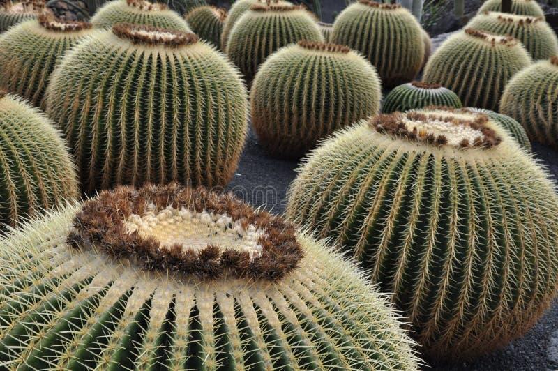 Paisaje Lanzarote de Jardin de cactus foto de archivo
