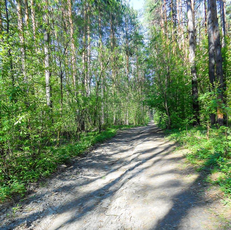 Paisaje ligero del bosque del pino, arbustos verdes a lo largo del camino derramado foto de archivo