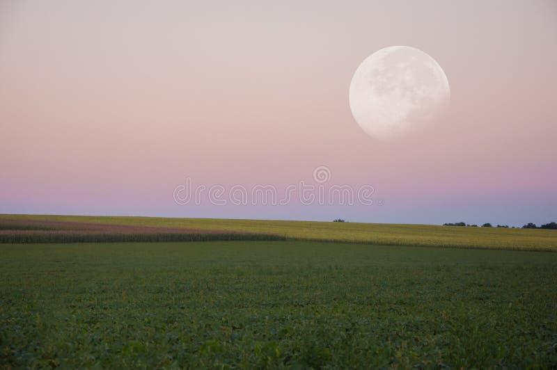 Paisaje Luna grande hermosa sobre el campo verde imágenes de archivo libres de regalías