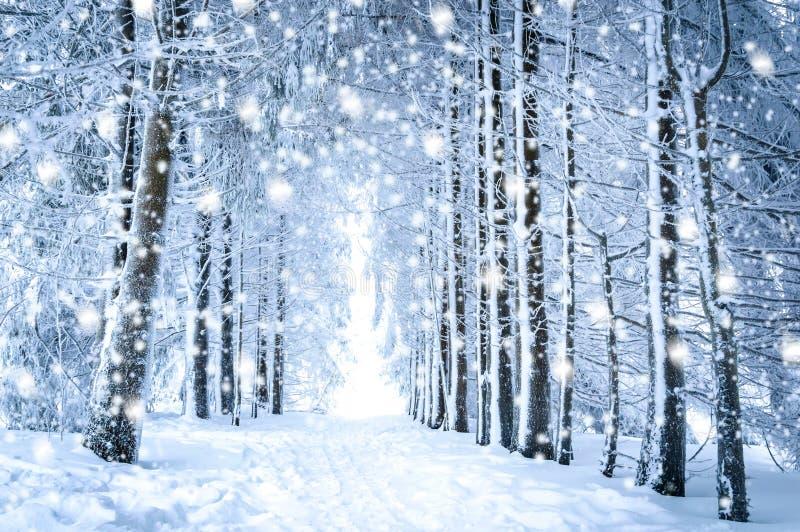 Paisaje mágico del invierno: trayectoria en el bosque nevoso con nieve que cae imagen de archivo libre de regalías