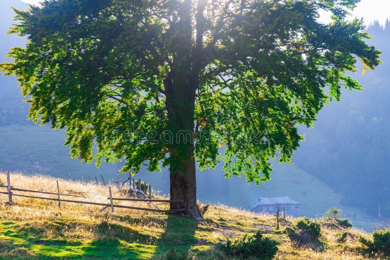 Download Paisaje Majestuoso De Las Montañas Con Las Hojas Verdes Frescas Foto de archivo - Imagen de cielo, follaje: 44852998