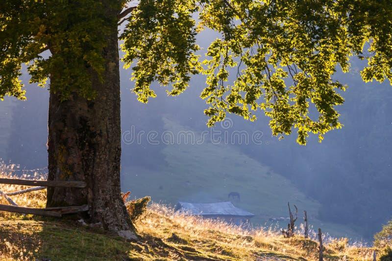 Download Paisaje Majestuoso De Las Montañas Con Las Hojas Verdes Frescas Imagen de archivo - Imagen de cielo, pista: 44853015