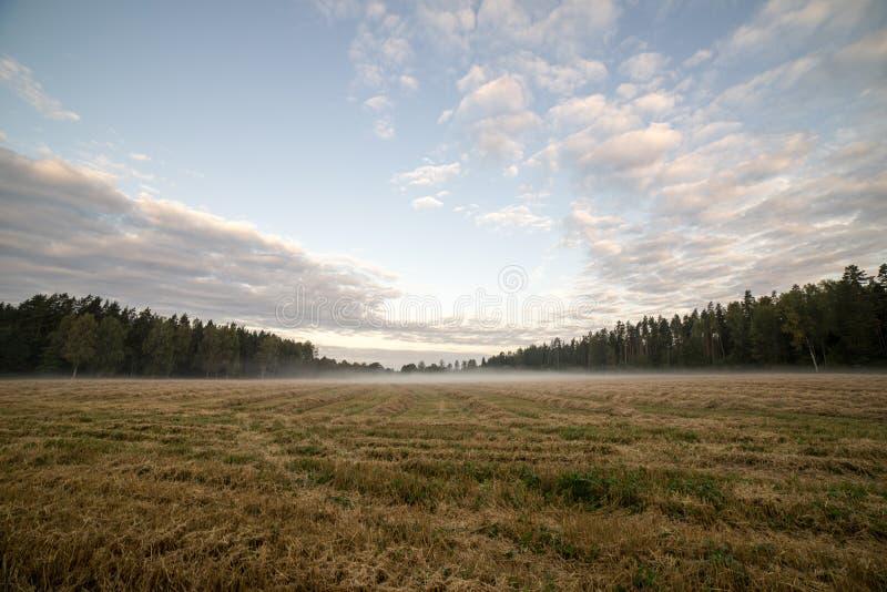 Download Paisaje Majestuoso Del País Debajo Del Cielo De La Mañana Con Las Nubes Foto de archivo - Imagen de ecología, bosque: 44850500