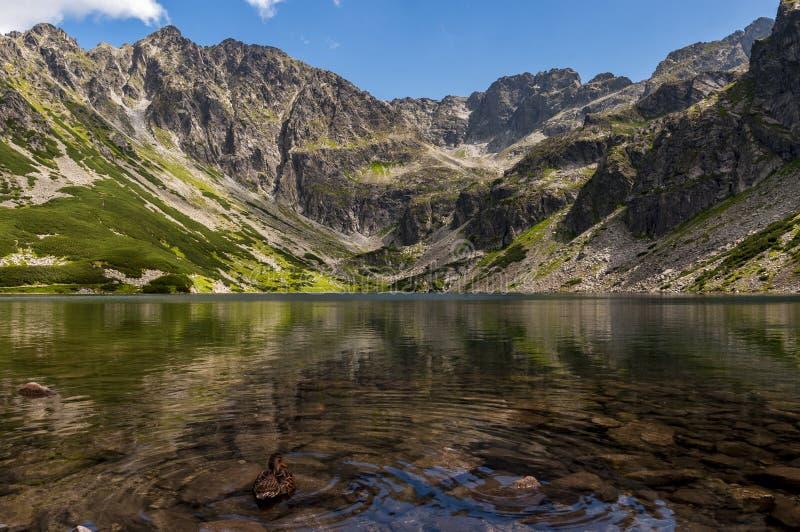 Paisaje maravilloso de un lago de la montaña en un día de verano fotografía de archivo