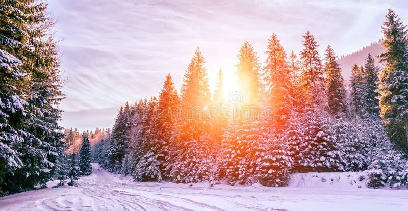 Paisaje maravilloso del invierno árbol de pino nevado bajo sunlig imagen de archivo