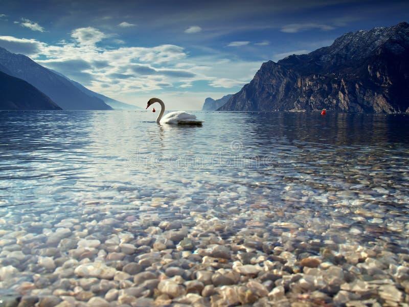 Paisaje marino con el cisne imagen de archivo libre de regalías