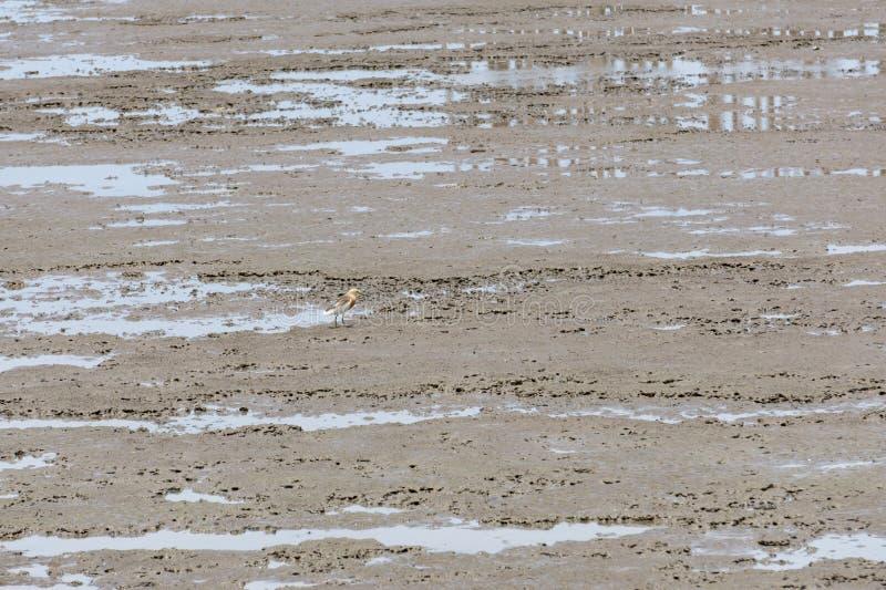 Paisaje marino en parque natural de los humedales, reconstrucción de la PU de la explosión, Thaila de la visión fotos de archivo libres de regalías