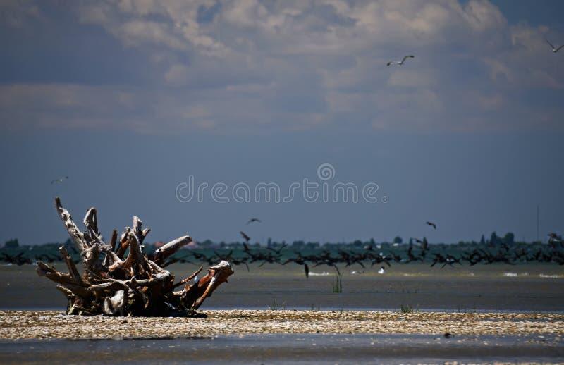Paisaje marino - una raíz enorme con las redes de pesca miente en una costa arenosa derramada con las cáscaras imágenes de archivo libres de regalías