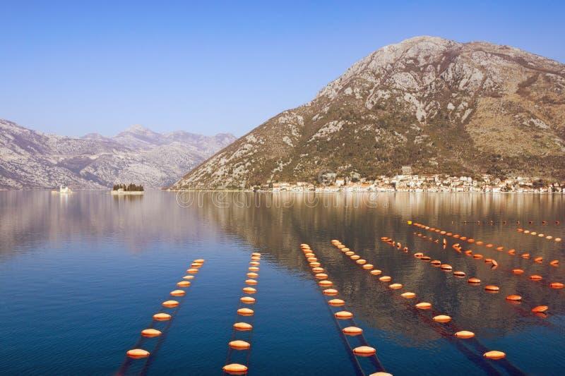 Paisaje mediterráneo hermoso Granja del mejillón de la cultura del palangre Montenegro, mar adriático, bahía de Kotor fotos de archivo
