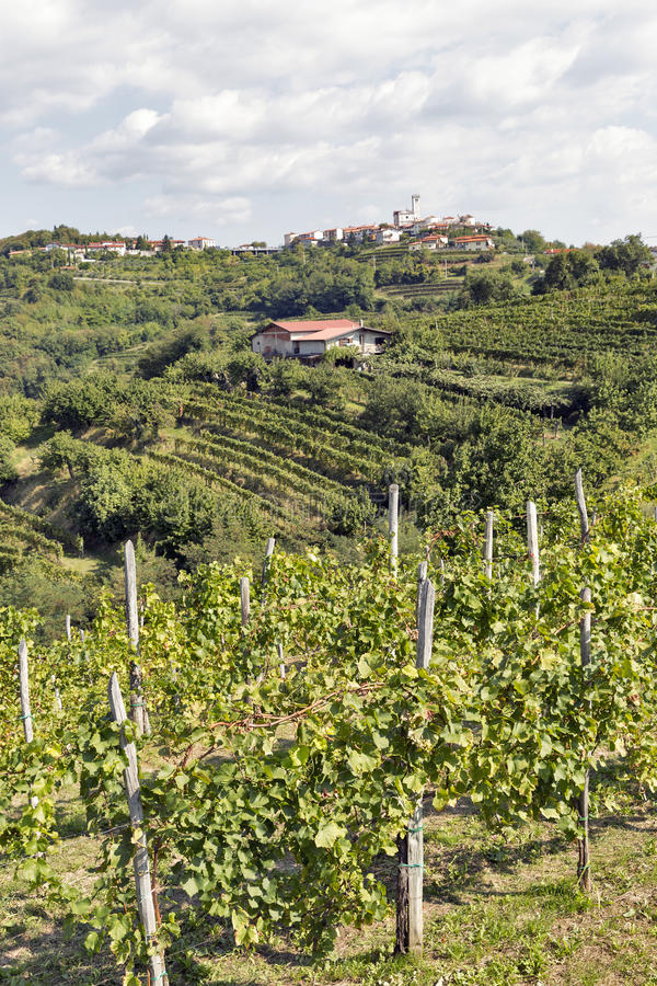 Paisaje mediterráneo rural pintoresco con los viñedos foto de archivo libre de regalías