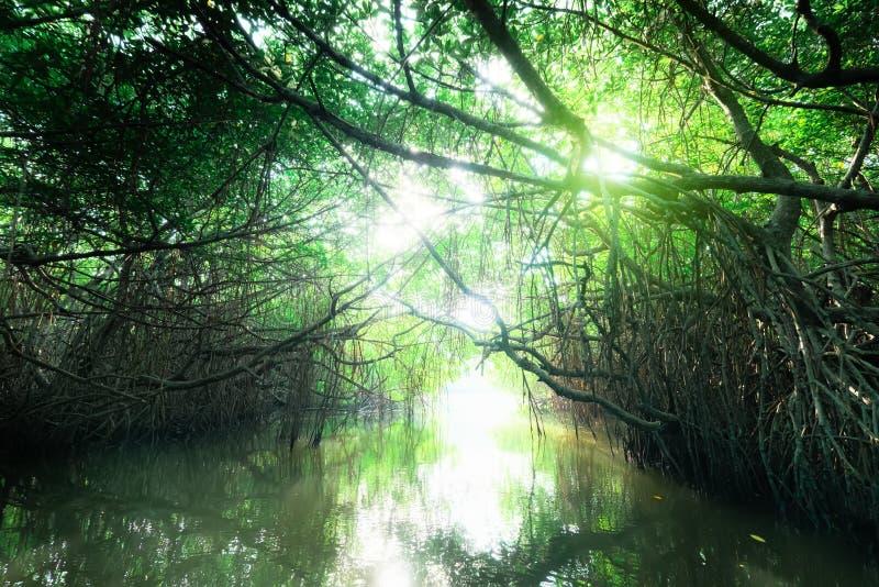 Paisaje misterioso de la selva tropical del mangle Sri Lanka fotos de archivo libres de regalías