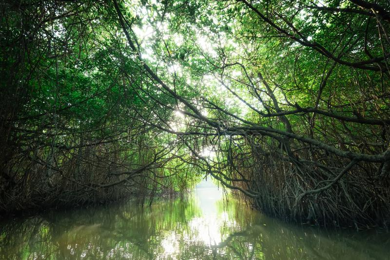 Paisaje misterioso de la selva tropical del mangle Sri Lanka foto de archivo libre de regalías
