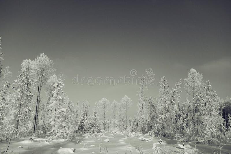 Paisaje monocromático del invierno foto de archivo libre de regalías
