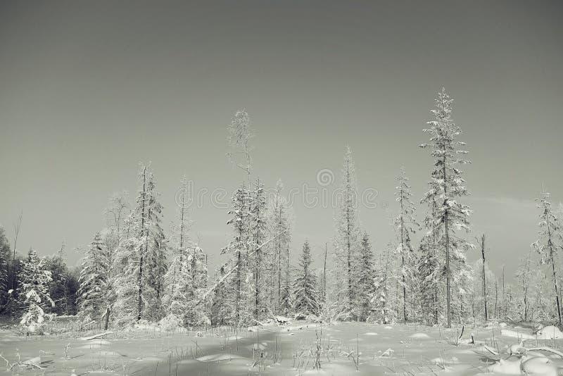 Paisaje monocromático del invierno imagenes de archivo
