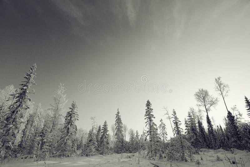 Paisaje monocromático del invierno imagen de archivo