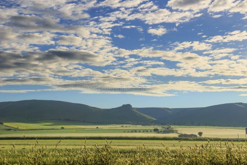 Paisaje montañoso con no maduro del campo de maíz dominado por las nubes: Alta Murgia National Park, Apulia Italia foto de archivo
