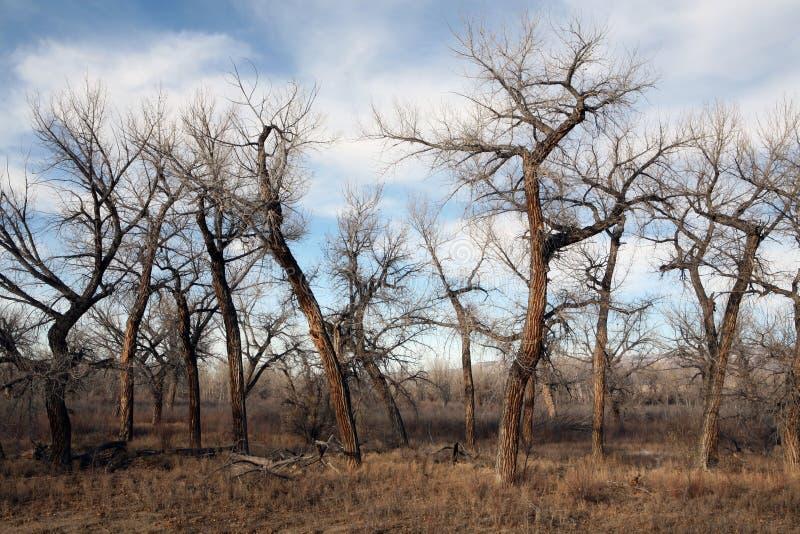 Paisaje muerto del árbol imagen de archivo libre de regalías