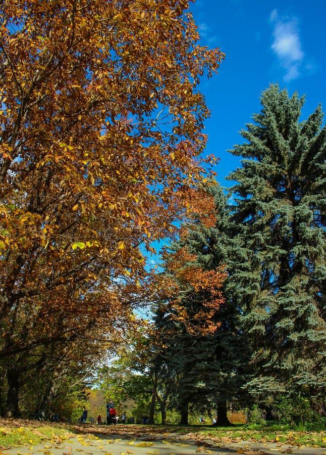 Paisaje multicolor del otoño hermoso en el tiempo soleado, cielo azul del claro foto de archivo