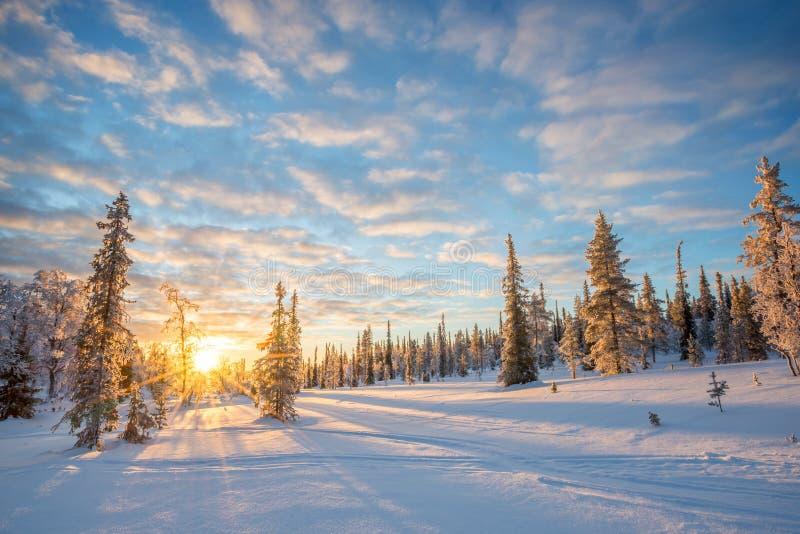 Paisaje Nevado en la puesta del sol, árboles congelados en invierno en Saariselka, Laponia Finlandia imágenes de archivo libres de regalías