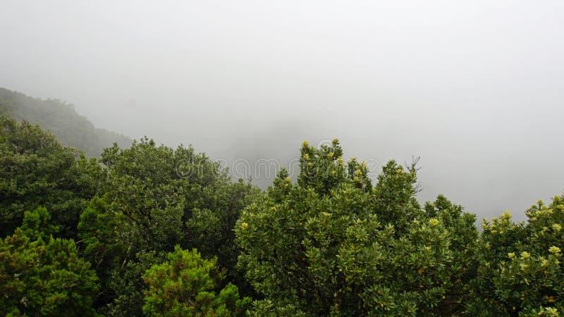Paisaje nublado y de niebla en montañas del anaga fotos de archivo libres de regalías