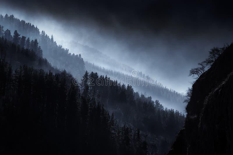 Paisaje oscuro con el bosque de niebla imagen de archivo