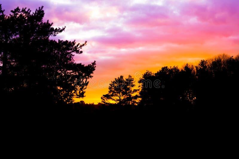 Paisaje oscuro del brezo en el bosque con las nubes nacaradas que colorean el cielo, un fenómeno raro del tiempo imagenes de archivo