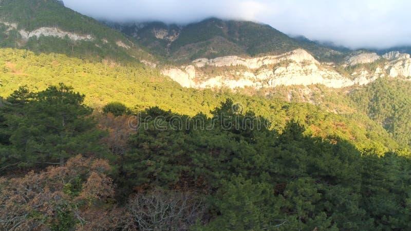 Paisaje otoñal con árboles secos y pinos verdes con grandes montañas cubiertas de bruma matutina Shot Vista aérea de foto de archivo libre de regalías