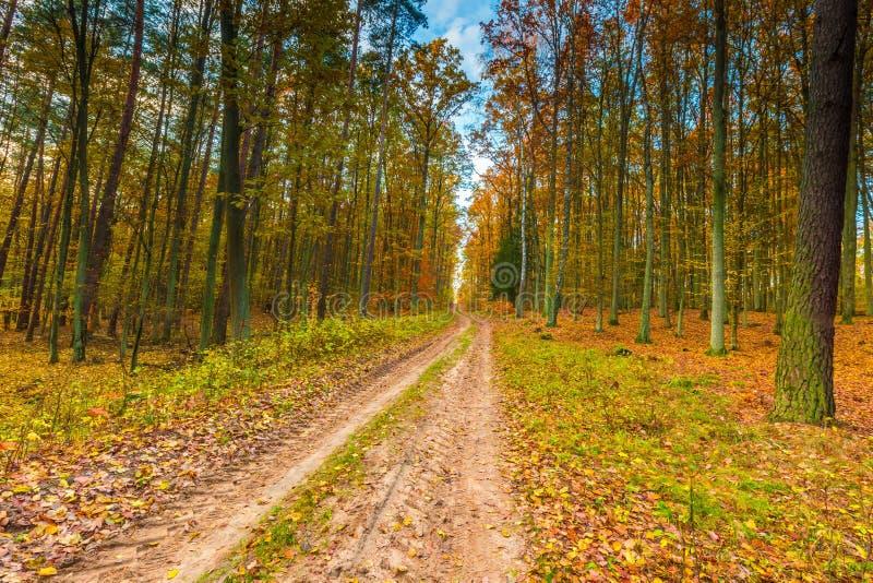 Paisaje otoñal europeo del bosque imagen de archivo