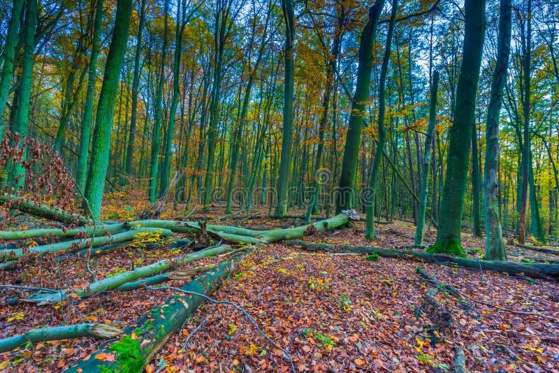 Paisaje otoñal europeo del bosque fotos de archivo