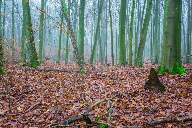 Paisaje otoñal hermoso del bosque imagen de archivo