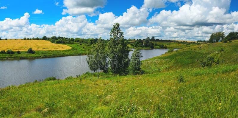 Paisaje panorámico del verano soleado con el río, los árboles de abedul, las colinas verdes hermosas y el campo del trigo maduro imagenes de archivo