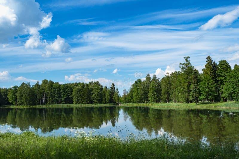 Paisaje panorámico minimalistic del verano con un lago en el parque fotografía de archivo