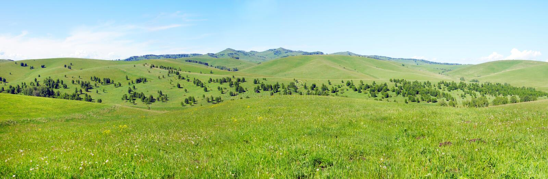 Paisaje panorámico montañoso hermoso del verano con las colinas herbosas verdes cubiertas con los árboles fotos de archivo