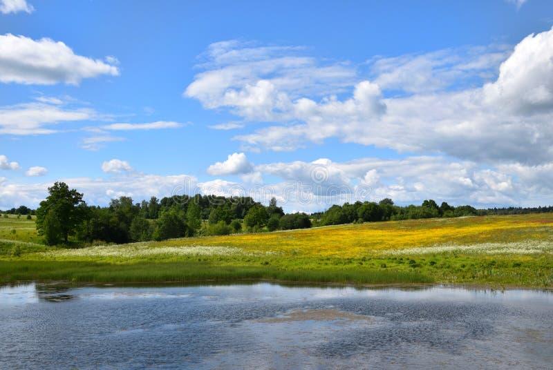 Paisaje pastoral de los campos florecientes del verano fotografía de archivo