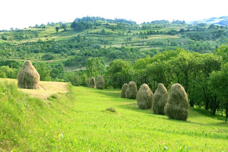 Paisaje pastoral (Maramures, Rumania) foto de archivo