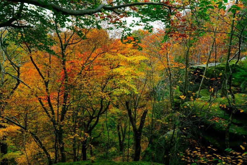 Paisaje pintoresco del otoño imagen de archivo
