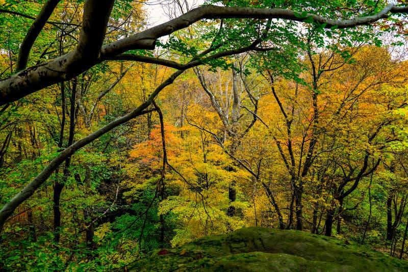 Paisaje pintoresco del otoño foto de archivo libre de regalías